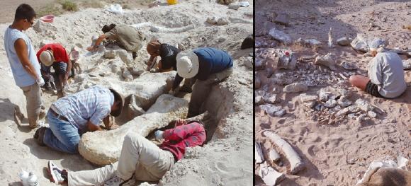 이융남 박사팀이 몽골 고비사막에서 데이노케이루스 뼈화석을 발굴하는 모습