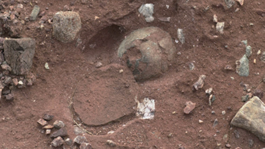 시화호 주변에서 발견된 공룡알 화석