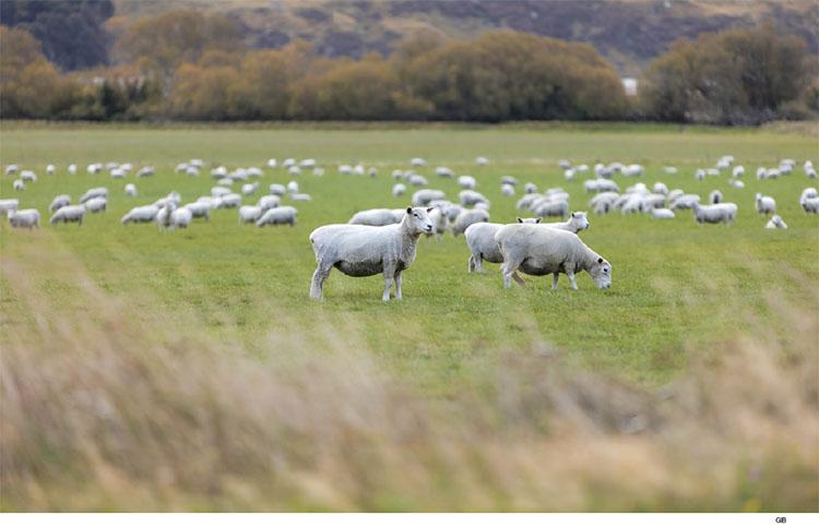 가축 육종은 인류에게 혜택이지만, 동식물의 입장에서는 조금 다를 수 있다. 이들의 삶의 질을 향상하려는 연구도 활발하다.