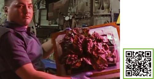 국제우주정거장에 머물고 있는 우주비행사가 베지에서 자란 상추를 보여주고 있다.