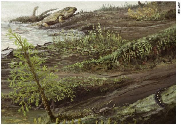 3억3500만 년 전 생물들의 모습이다. 지금의 병원균 조상들이 초기 육지 동물의 장에서 살았을 것으로 추정된다.