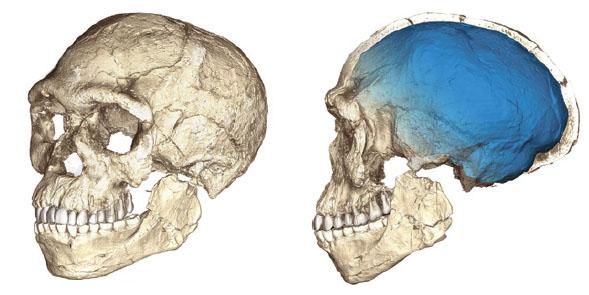 모로코의 제벨 이르후 지역에서 발견된 약 30만 년 전 현생인류의 화석을 바탕으로 복원한 이미지.