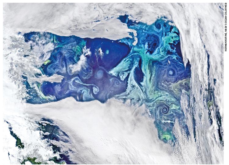 식물성 플랑크톤(청록색)이 남극해에 분포한 모습을 인공위성으로 촬영했다. 고르게 퍼지지 못하고 오른쪽 아래에 몰려 있는 모습을 확인할 수 있다. 2011년 발사된 미국의 극지관측위성인 '수오미(Suomi NPP)'가 2016년 2월 촬영했다.