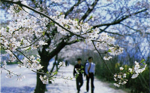 봄에 사람을 괴롭히는 화분증
