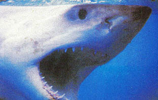 공포의 백 상어, 계속 삼키는 이유는?