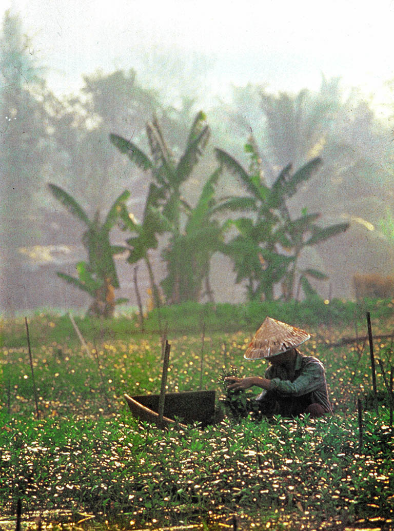 오랜 전쟁에 시달리다 통일된 나라 베트남