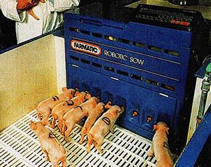 아기 돼지를 잘 이해하는 로봇 돼지엄마 등장