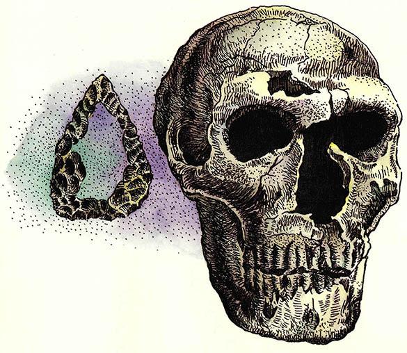 유전학적 증거 갖고 두학파 맞서 네안데르탈인은 인류의 직계 조상인가?