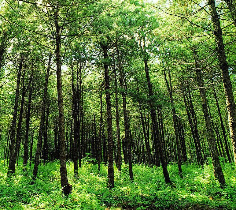한반도 숲 식물들의 세력다툼
