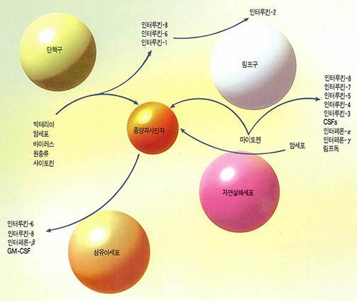 (2) 면역 호르몬 사이토킨, 암퇴치의 첨병