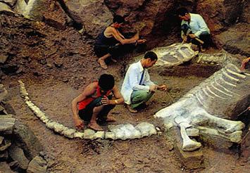 1. 두개골 비슷, 첫 발견때부터 파충류 분류