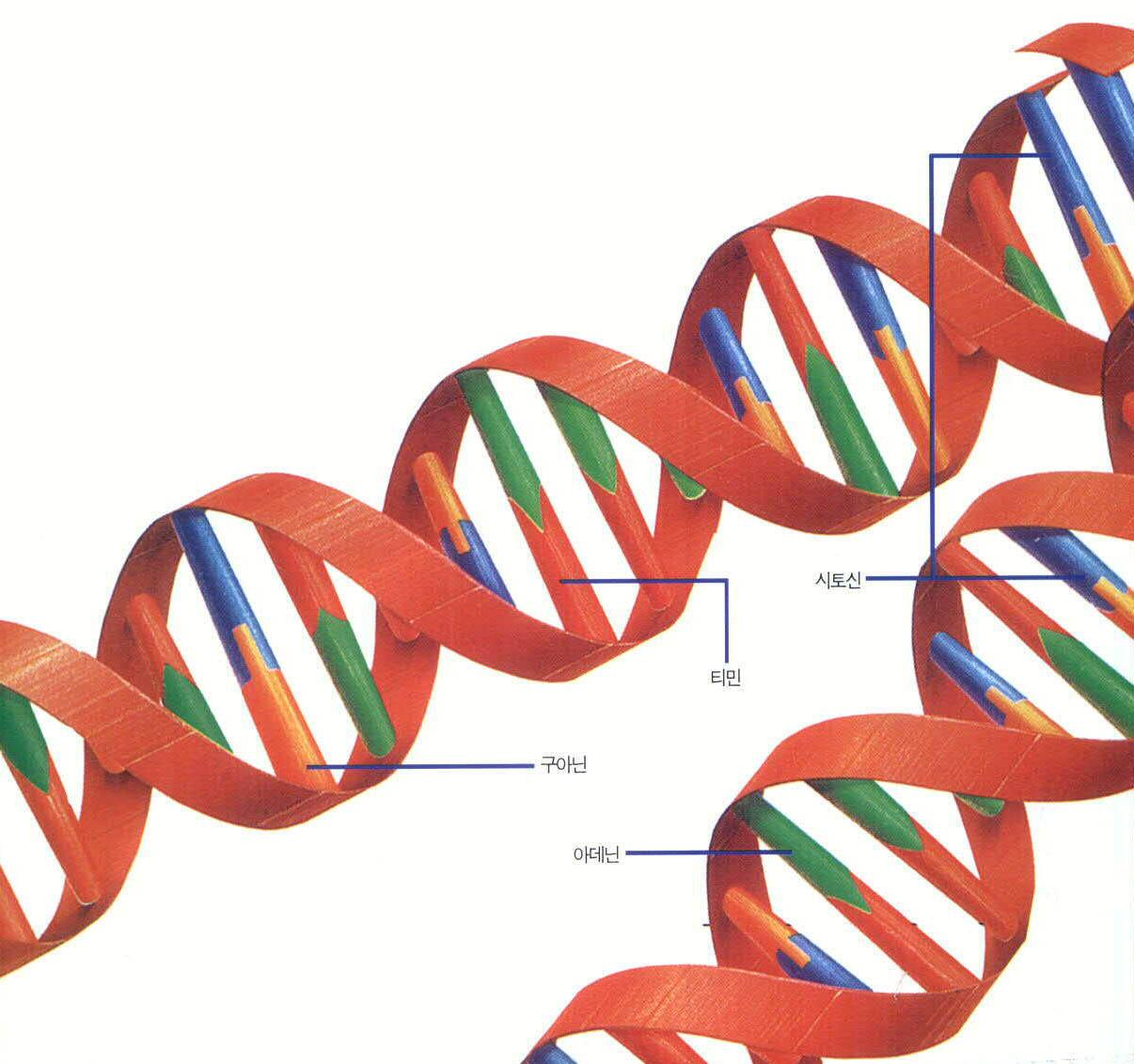 DNA를 직접 복제 해보자