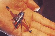 4. 바퀴벌레의 지혜터득한 로보로치