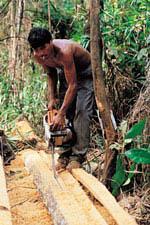 80년 후 지구상에 열대우림은 없다.