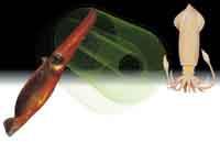 3. 생명현상 조절하는 생체전지