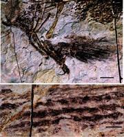 깃털공룡이 말하는 조류 진화의 비밀