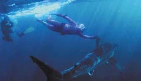 지구 생물체 80% 존재하는 바다 개척