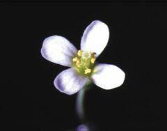 꽃 피게 만드는 유전자의 세계