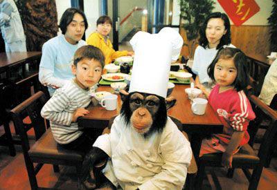 1 인간은 머리기른 침팬지?