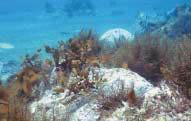 사막화되는 독도 앞바다