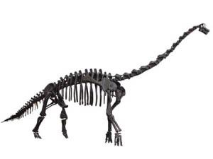 세계 3번째로 큰 공룡 한국에 왔다