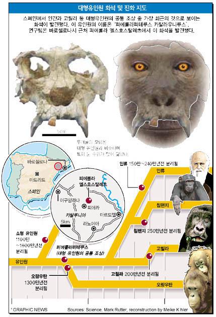 대형유인원 화석 및 진화 지도