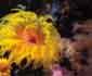 쓰나미도 잠재운 산호초의 힘