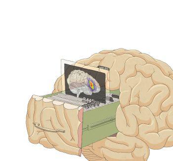 뇌는 블랙박스가 아니다