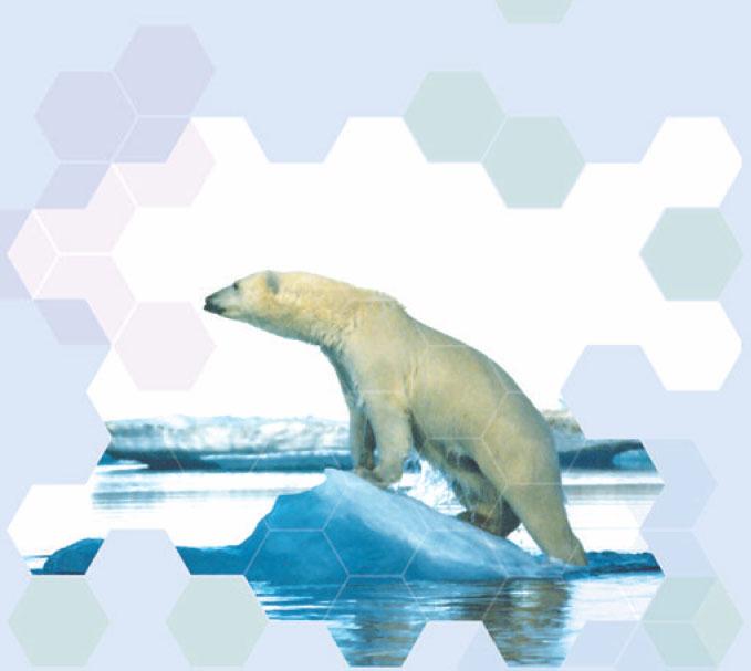 수소결합에 감사하는 북극곰