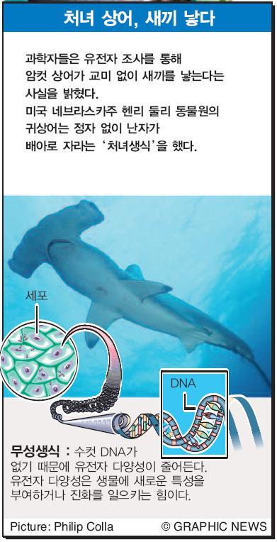 처녀 상어, 새끼 낳다