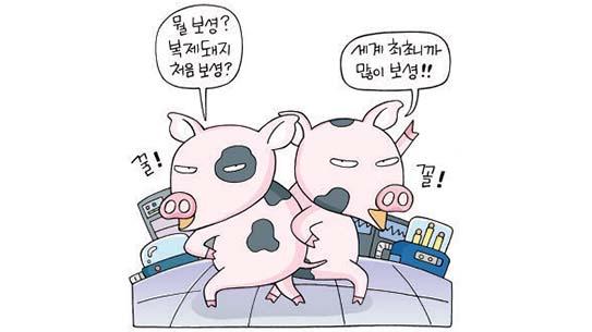 세계 최초 줄기세포 복제돼지 탄생!