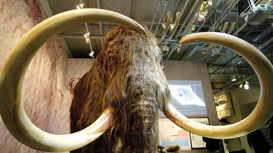 거대 동물 멸종 미스터리 10000BC로떠나다