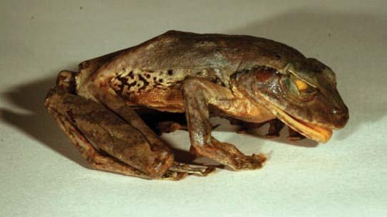 있다? 없다? 별난 신종 생물을 찾아서 보너스 화보 2007년의 특이한 신종 생물