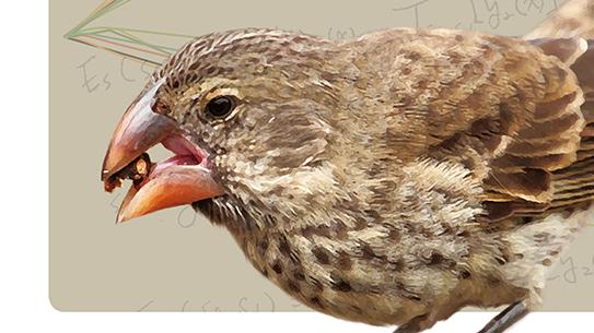 아핀변환으로 해석한 핀치 부리의 진화
