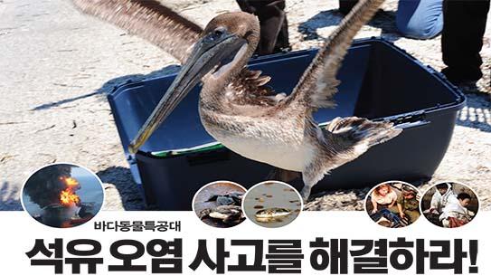바다동물특공대 석유 오염 사고를 해결하라!