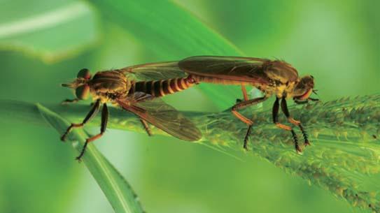 곤충들의 사랑이 뿅뿅뿅 우리 방금 결혼했어요!