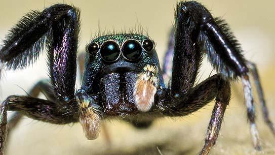 놀라워서 깡충! 거미