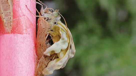 알부터 성충까지 관찰 - 배추흰나비 키우기