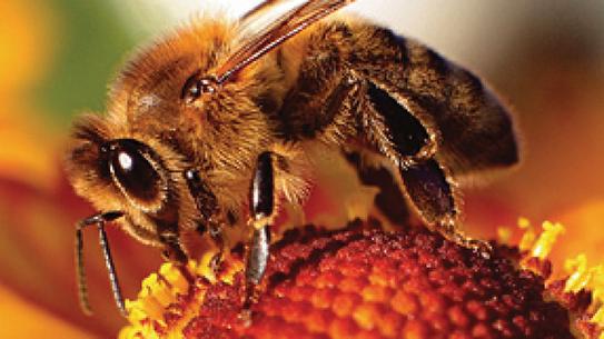 Part 1. 꿀벌 여왕의 독백
