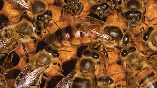 Part 2. 꿀벌에게 무슨 일이?