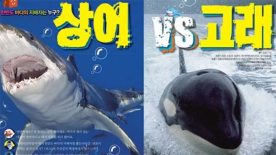 한반도 바다의 지배자는 누구? 상어 VS 고래