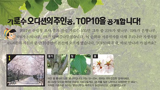 가로수 오디션의 주인공, TOP10을 공개합니다!