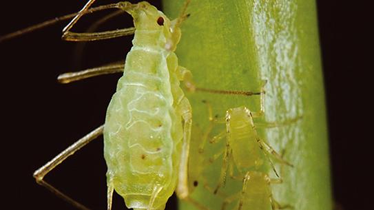 광합성 하는 곤충 첫 발견