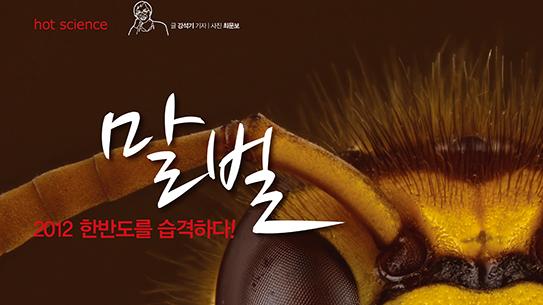 2012 한반도를 습격하다! 말벌