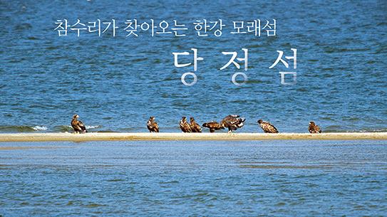 참수리가 찾아오는 한강 모래섬, 당정섬