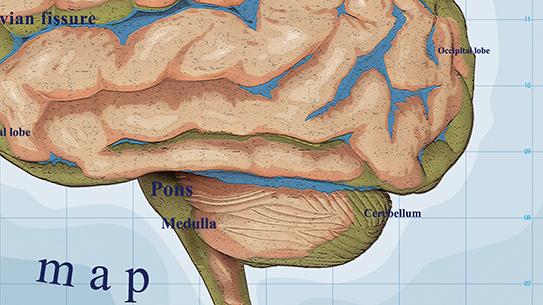 Part 2. 항해 : 뇌지도를 만들기 위한 4가지 전략