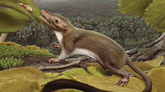 6500만 년 전, 공룡이 사라진 땅에 작은 원숭이가 나타났다