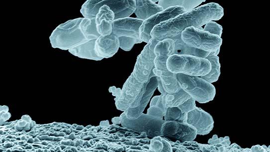 박테리아 VS 바이러스