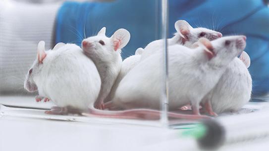 매년 쥐 100마리 신체검사 하는 독일마우스병원
