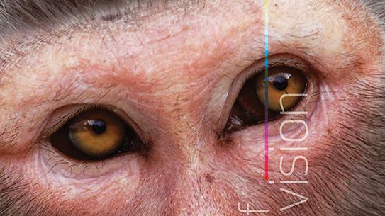 다람쥐원숭이 수컷은 왜 빨간 색을 보지 못할까